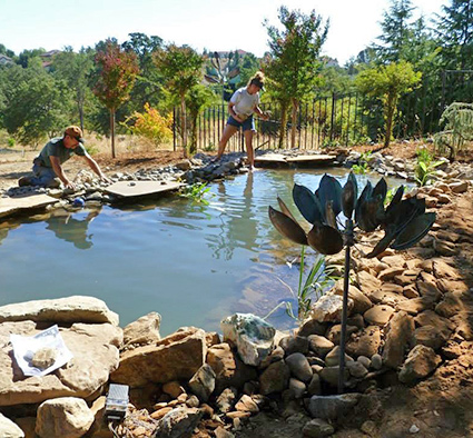 Pond Maintenance - Greewalt