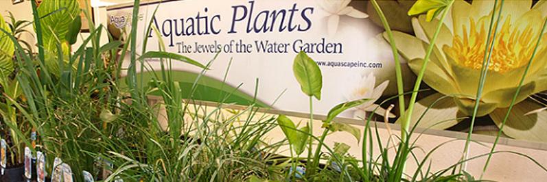pond construction aquatic plants Jackson CA area Amador County & Calaveras County