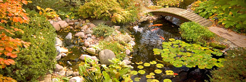 pond construction water gardens koi fish Jackson CA area Amador County & Calaveras County